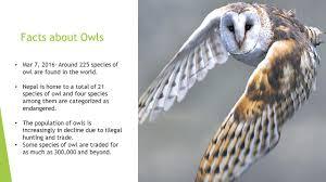 Scientific Name Of Barn Owl 4th Grade Science Ms Maldonado Ppt Video Online Download