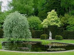 pyrus salicifolia pendula weeping pear tree silver grey