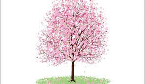 pink cherry blossom tree vectorish