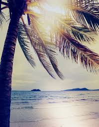 wall decals for home wall vinyl stickers vinyl art decals palm tree coastline sunset wall mural 6040