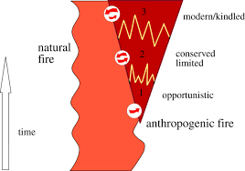 the discovery of fire by humans a long and convoluted process