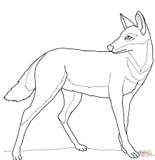 ethiopian wolf coloring free printable coloring pages