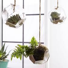hanging glass terrarium pbteen