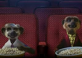 meerkat movies compare the meerkat