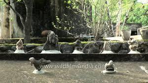 Nek Chand Rock Garden by Nek Chand U0027s Rock Garden In Chandigarh Youtube