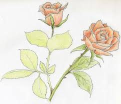 100 drawing of a rose flower 20 rose drawings free psd ai