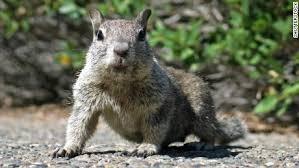 squirrel sparks ohio voting outage cnnpolitics