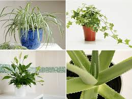house plant therapy best air purifying plants