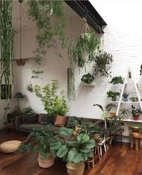 24 best aesthetic images on pinterest home plants and at home