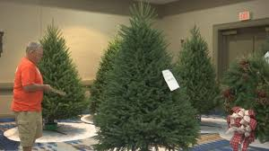 christmas tree farmers compete to be this year u0027s white house