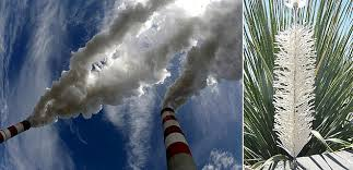 carbon capture artificial trees co2 from the air about us