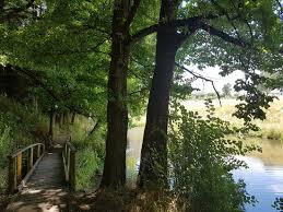 Kyneton Botanical Gardens River Pathway Boardwalk Picture Of Kyneton Botanical Gardens