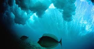 scientists solve ocean u0027carbon sink u0027 puzzle carbon brief