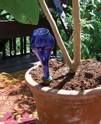 watering spikes for self watering plants u0026 vacation watering
