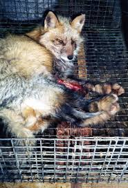 animals used for fur peta