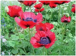 flowers wi heirloom plant farm perennial flowers plants wisconsin
