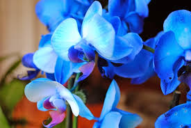 Pictures Of Beautiful Flowers In The World - top 10 most beautiful flowers in the world mathias sauer