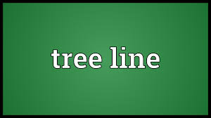 ttees meaning tree line meaning youtube