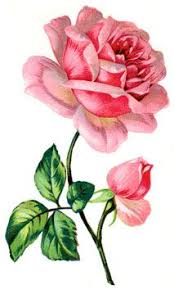 Names And Images Of Flowers - best 25 pictures of flowers ideas on pinterest beautiful