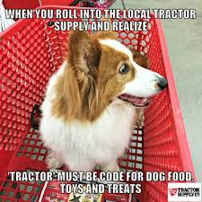 Dog Food Meme - the chronicles of cardigan look at all the cat and dog stuff the
