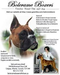 boxer dog sayings funny boxer dog quotes