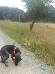 Nook loving her walk at Garin Picture of Garin Regional Park