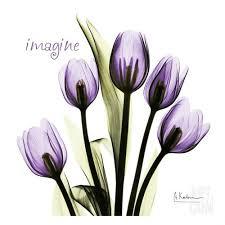 imagine tulips tattoo designs
