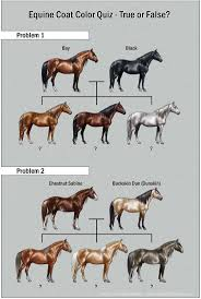 44 best horses images on pinterest colors cream and genetics
