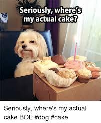 Birthday Cake Dog Meme - 25 best memes about dog cake dog cake memes