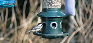 How To Attract Indigo Buntings To Your Backyard Backyard Birds Of Nj How We Attract Amazing Birds To Our Backyard
