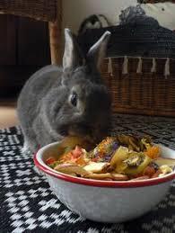 cuisine du lapin la dure vie du lapin urbain friandises lapin