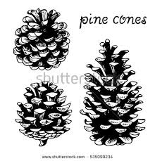 pinecone stock images royalty free images u0026 vectors shutterstock