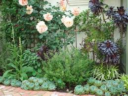the 25 best outdoor cactus garden ideas on pinterest suculant