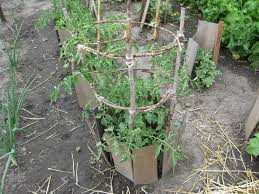 tomato cage ideas u2014 new decoration how to build tomato cages ideas