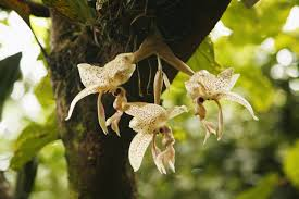 vanilla orchid it s about time you knew exactly where vanilla comes from huffpost
