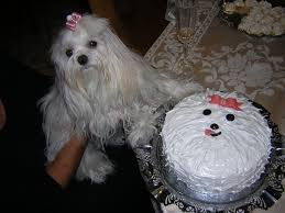 39 best birthday cakes for dogs images on pinterest birthday