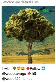 Tree Meme - 25 best memes about tree meme tree memes