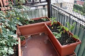 garden design garden design with growing vegetables in full sun