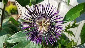 Free Images Nature Produce Natural Botany Garden Flora