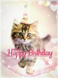 Happy Birthday Cat Memes - happy birthday meme cats happy birthday cat meme pinterest
