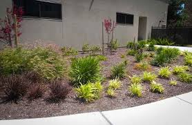simple drought tolerant landscaping ideas u2014 home ideas collection