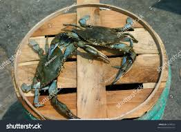 two male crabs fighting on barrel stock photo 3398552 shutterstock