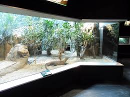 Turtle Back Zoo Light Show by 178 Best Big Reptile Enclosures Images On Pinterest Reptile