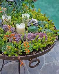 succulent planters creative indoor and outdoor succulent garden ideas succulents