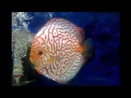 aquarama the international ornamental fish exibition singapore