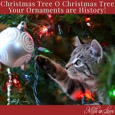Christmas Tree Meme - 7 funny christmas memes to make you laugh milk and love