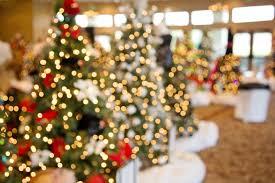 christmas tree flower lights free images light bokeh flower christmas tree celebrate