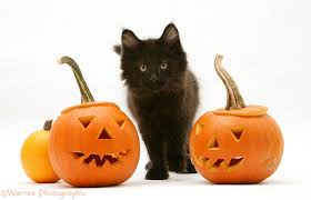 halloween kitties background halloween kittens photo