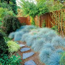 6 ornamental grasses the birds drought tolerant plants