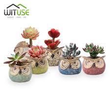 100 cute succulent planters five hand painted succulent